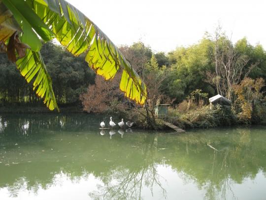 Парк Южные культуры. Адлер